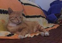 給小公橘貓絕育後,明目張膽帶公貓回家,還做出更過分的事