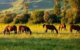 有一種浪漫叫那拉提!想去新疆旅遊?那拉提的花海與草原不容錯過