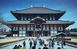 讀萬卷書,行萬里路,帶娃去日本旅行