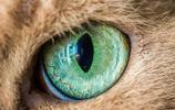 """重口味之真正的""""貓眼"""""""