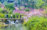 距重慶3小時車程景區,四月評國內最美,網友說這個100門票有爭議