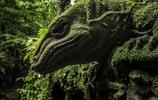 苔蘚的世界,宛如精靈的世界,大自然才是鬼斧神工