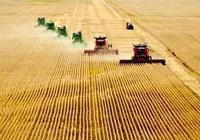 種植結構調整後,國產大豆的國際競爭力是否增強了?