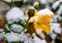 心理學:哪束雪中花最驚豔,測出你身邊會出現貴人還是小人