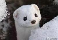 世界上十大長相可愛卻不常見的動物,每一隻都萌化了