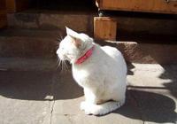 貓咪為什麼離開家之後,就不會回來了?原因有5個