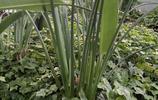這些植物適合室內栽培,還包括一些中草藥,你見過幾種?