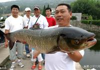 釣草魚的季節到來了,高手教你如何釣草魚!