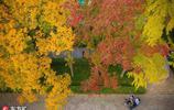 霜降節氣至,南京迎秋季最佳觀賞期,色彩斑斕猶如畫卷