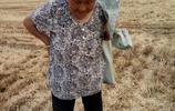 農村大媽撿麥子,她的一番話,讓我眼裡進了沙子