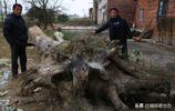 村民挖出古楠木,價格不合適放在院中供人觀賞, 網友說:國家的