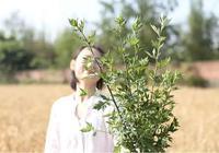 艾草和艾蒿的區別是什麼,如何區別艾草和蒿草?