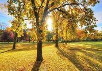 這個秋天,願你安好