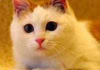 貓咪因調皮被關籠子裡,準備教訓它一下,它的眼神讓主人心軟了