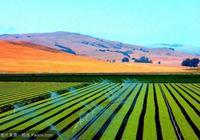 美國農業部:中國購買113萬噸美國大豆 但數量不足以刺激低迷價格