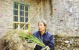 他被稱為三峽奇人,34年來以吃草為生,妻子無法忍受離他而去