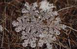 攝影圖集:雪絨花的末日啟示