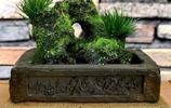 菖蒲的樸素加古磚的奢華,將菖蒲發揮到淋漓盡致,搭配才是硬道理