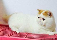 貓咪貧血的原因有哪些?怎麼預防貓咪貧血?