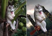 卡在椰子樹上的哈士奇