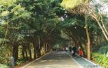 廣西最大海島潿洲島精華線路:是中國保存最完整的火山活動遺蹟