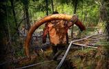 攝影師深入西伯利亞,窺探西伯利亞非法猛獁象牙盜採者