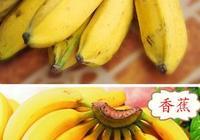 香蕉與芭蕉的區別是什麼?