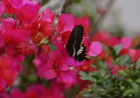 很多德州人都叫不出這些花的名字!最全賞花指南送給你!一整個春天都在這兒了!