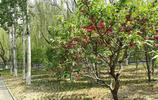 北京海淀區南長河公園景色