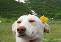 """遇上這樣的狗,主人又好氣又好笑!狗:""""怪我咯?"""""""