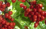 """8種最容易盆栽種植的水果,第五款被稱為""""水果皇后"""",你家有嗎"""