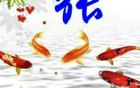 姓氏壁紙圖,花開富貴,連年有魚,財源廣進你喜歡啥圖選啥圖