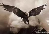 鷹的重生.....