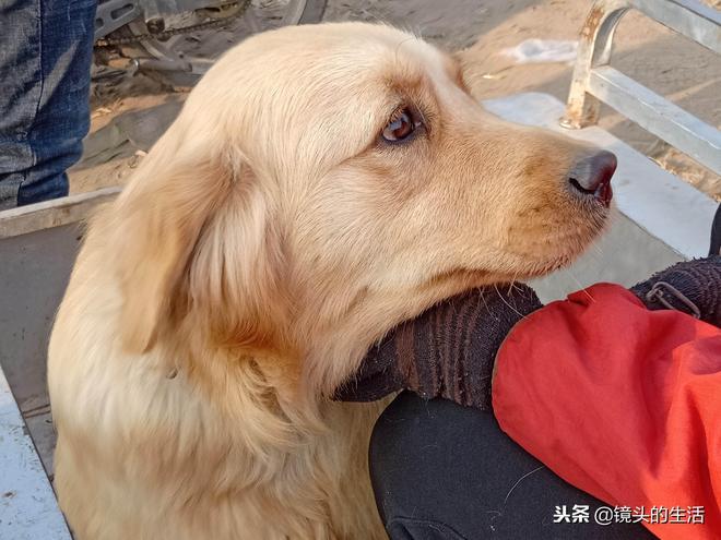 農村老倆口賣2歲愛犬,半天未賣出,大爺:不賣了,回家過暖冬