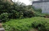 實拍:農村因外出打工而廢棄的老院子,已成為別人家的菜園子
