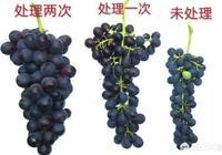 夏黑葡萄的膨大劑怎麼配?