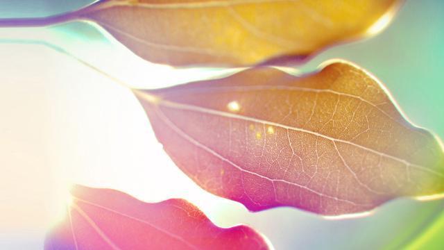 「新鮮熱辣」一簇一美感,一葉一情懷,HD超清壁紙