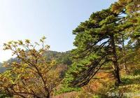 黃山最美的一個風景點是在哪裡?
