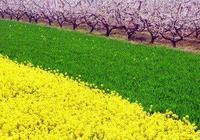 面向大海,春暖花開