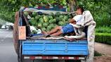 38度高溫下 農村小夥驅車100裡到城裡路邊賣自家種的西瓜 一車西瓜七天賣不完 累的在車上睡著了