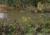 魅力寶應:涇河之河
