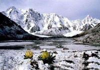 天山,天山雪蓮之鄉——亞洲中部最大的山脈