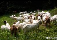 我想養羊,不知需要投資多少?前景如何?