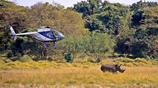 為了犀牛不受到傷害,他們只能這樣做