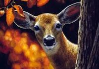 插畫|森林動物們的生活寫照插畫
