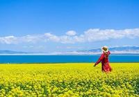 青海湖的油菜花開了!自駕遊西北,還有燃油補貼可以領