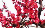 不要在家裡亂養花,這些盆景樹型好寓意美,富貴人家都愛種