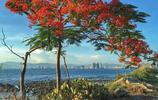三亞鳳凰島,優美風景,值得一遊