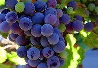 阿根廷精品馬爾貝克葡萄酒推薦