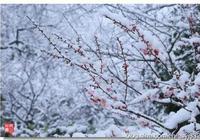 原創詩詞《鷓鴣天》一此情莫問何時了,寂寞長空隨雪遙
